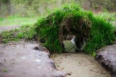 Ρέοντας νερό στο πάρκο Στοκ Φωτογραφία