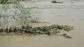 Ρέοντας ποταμός μετά από μια θυελλώδη βροχή φιλμ μικρού μήκους