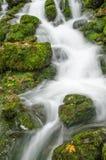 Ρέοντας ύδωρ και πράσινο βρύο Στοκ Φωτογραφίες