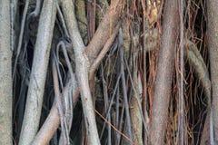 Ρίζα δέντρων με έναν σταυρό στοκ φωτογραφία με δικαίωμα ελεύθερης χρήσης