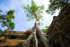 Ρίζα δέντρων στο ναό TA Prohm Στοκ Εικόνες
