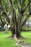 Ρίζα δέντρων Στοκ εικόνα με δικαίωμα ελεύθερης χρήσης