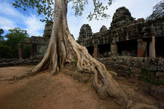 Ρίζα δέντρων Στοκ Φωτογραφίες