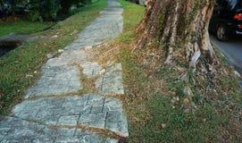 Ρίζα δέντρων που προκαλεί τη ζημία πεζοδρομίων Στοκ Εικόνες