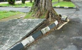 Ρίζα δέντρων που προκαλεί τη ζημία πεζοδρομίων Στοκ Φωτογραφία
