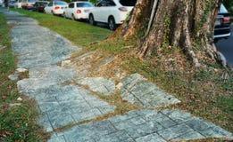 Ρίζα δέντρων που προκαλεί τη ζημία πεζοδρομίων Στοκ φωτογραφία με δικαίωμα ελεύθερης χρήσης