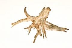 ρίζα ξύλινη στοκ φωτογραφία με δικαίωμα ελεύθερης χρήσης