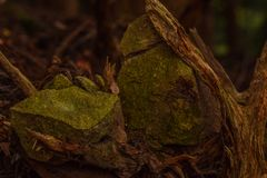 Ρίζα-πιασμένοι βράχοι, Nikko Ιαπωνία στοκ εικόνες