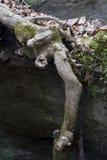 Ρίζες δέντρων που εκτίθενται στη βουνοπλαγιά στοκ φωτογραφία με δικαίωμα ελεύθερης χρήσης