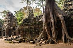 Ρίζες δέντρων Angkor Στοκ εικόνες με δικαίωμα ελεύθερης χρήσης