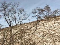 Ρίζες και κλάδοι στο Βερολίνο Στοκ εικόνα με δικαίωμα ελεύθερης χρήσης