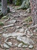 Ρίζες και πέτρες Στοκ φωτογραφία με δικαίωμα ελεύθερης χρήσης