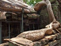 Ρίζες που καλύπτουν τις πέτρες του ναού Angkor Wat Στοκ φωτογραφία με δικαίωμα ελεύθερης χρήσης