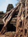 Ρίζες που καλύπτουν τις πέτρες του ναού Angkor Wat Στοκ Εικόνες