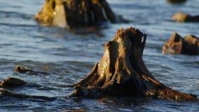 Ρίζες στη θάλασσα φιλμ μικρού μήκους