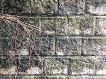 Ρίζες στον τοίχο Στοκ εικόνα με δικαίωμα ελεύθερης χρήσης