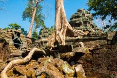 Ρίζες του γιγαντιαίου δέντρου στο atient παλαιό ναό TA Phrom, Angkor Wat, Καμπότζη Στοκ Εικόνες