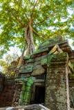 Ρίζες του γιγαντιαίου δέντρου στο atient παλαιό ναό TA Phrom, Angkor Wat, Καμπότζη Στοκ φωτογραφίες με δικαίωμα ελεύθερης χρήσης