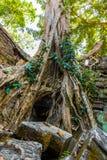 Ρίζες του γιγαντιαίου δέντρου στο atient παλαιό ναό TA Phrom, Angkor Wat, Καμπότζη Στοκ φωτογραφία με δικαίωμα ελεύθερης χρήσης