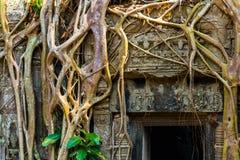 Ρίζες του γιγαντιαίου δέντρου στο atient παλαιό ναό TA Phrom, Angkor Wat, Καμπότζη Στοκ εικόνες με δικαίωμα ελεύθερης χρήσης