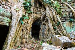 Ρίζες του γιγαντιαίου δέντρου στο atient παλαιό ναό TA Phrom, Angkor Wat, Καμπότζη Στοκ Φωτογραφίες
