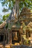 Ρίζες του γιγαντιαίου δέντρου στο atient παλαιό ναό TA Phrom, Angkor Wat, Καμπότζη Στοκ Φωτογραφία