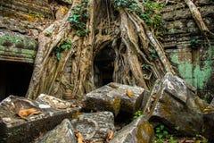 Ρίζες του γιγαντιαίου δέντρου στο atient παλαιό ναό TA Phrom, Angkor Wat, Καμπότζη Στοκ Εικόνα