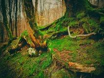 Ρίζες του δέντρου με το πράσινο βρύο στοκ εικόνες με δικαίωμα ελεύθερης χρήσης