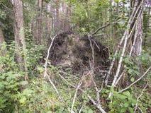 Ρίζες του δέντρου στοκ φωτογραφία με δικαίωμα ελεύθερης χρήσης