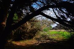 Ρίξτε κάτω από τα δέντρα στην αλλαγή βάρδιας Vicentina κοντά Zambujeira du Mar σε Sou στοκ φωτογραφίες