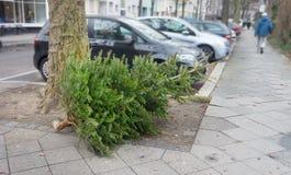 Ρίξτε μακριά το δέντρο έλατου ή το χριστουγεννιάτικο δέντρο μετά από το νέο έτος, απορριμμένο χριστουγεννιάτικο δέντρο στοκ φωτογραφία με δικαίωμα ελεύθερης χρήσης
