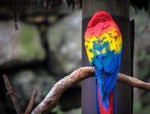 ρίψη παπαγάλων Στοκ Εικόνα