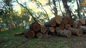 Ρίψη του ξύλου πυρκαγιάς στο σωρό