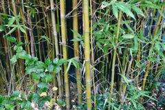 Ραβδιά μπαμπού με τα πράσινα φύλλα Στοκ Φωτογραφία