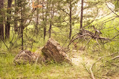 Ραβδιά και πέτρες Στοκ φωτογραφία με δικαίωμα ελεύθερης χρήσης