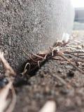 Ραβδιά και φύλλα Στοκ εικόνα με δικαίωμα ελεύθερης χρήσης