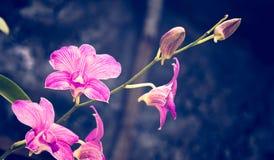 Ραβδωμένα λουλούδια ορχιδεών και ζωηρόχρωμο υπόβαθρο bokeh Στοκ Φωτογραφία