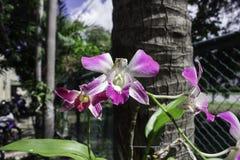 Ραβδωμένο ροζ orchid λουλούδι Στοκ φωτογραφία με δικαίωμα ελεύθερης χρήσης