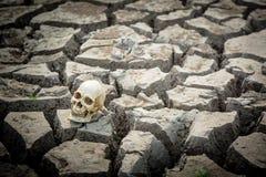 Ραγισμένη γη και ανθρώπινο κρανίο Στοκ Εικόνα