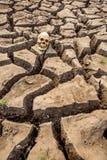 Ραγισμένη γη και ανθρώπινο κρανίο Στοκ εικόνες με δικαίωμα ελεύθερης χρήσης