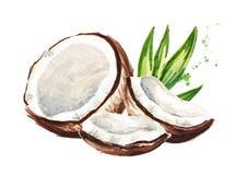 Ραγισμένη καρύδα Συρμένη χέρι απεικόνιση Watercolor, που απομονώνεται στο άσπρο υπόβαθρο ελεύθερη απεικόνιση δικαιώματος