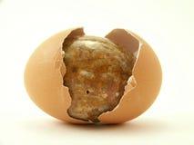 ραγισμένη πέτρα κοχυλιών αυγών Στοκ εικόνες με δικαίωμα ελεύθερης χρήσης