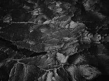 ραγισμένη παλαιά σύσταση δέρματος Στοκ Εικόνες