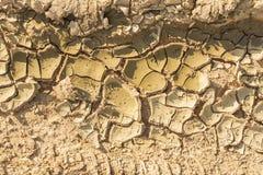 Ραγισμένος, ξηρασία στη γεωργία στοκ εικόνα
