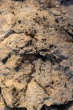 Ραγισμένος πετρώνοντας άργιλος που καλύπτεται με το βρύο ως υπόβαθρο στοκ φωτογραφίες με δικαίωμα ελεύθερης χρήσης
