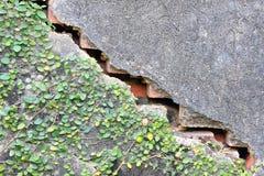 ραγισμένος τοίχος Στοκ Εικόνα