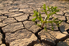 ραγισμένο άψυχο χώμα Στοκ φωτογραφία με δικαίωμα ελεύθερης χρήσης