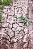 Ραγισμένο έδαφος, πορεία, χώμα με την ξηρά χλόη εικόνες οικολογίας έννοιας πολύ περισσότεροι το χαρτοφυλάκιό μου Ραγισμένο υπόβαθ Στοκ φωτογραφίες με δικαίωμα ελεύθερης χρήσης