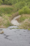 Ραγισμένο ίχνος τσιμέντου που οδηγεί στο δασικό λιβάδι κονσερβών Στοκ Φωτογραφία