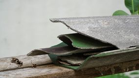 Ραγισμένο κεραμίδι στεγών στο ξύλο Στοκ φωτογραφία με δικαίωμα ελεύθερης χρήσης